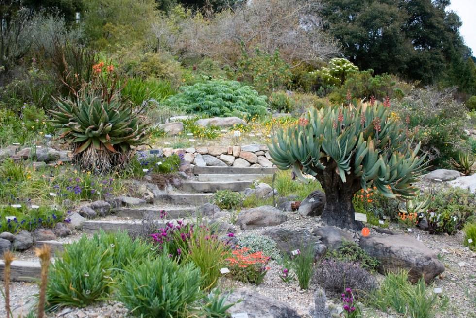 botanical-garden-berkeley