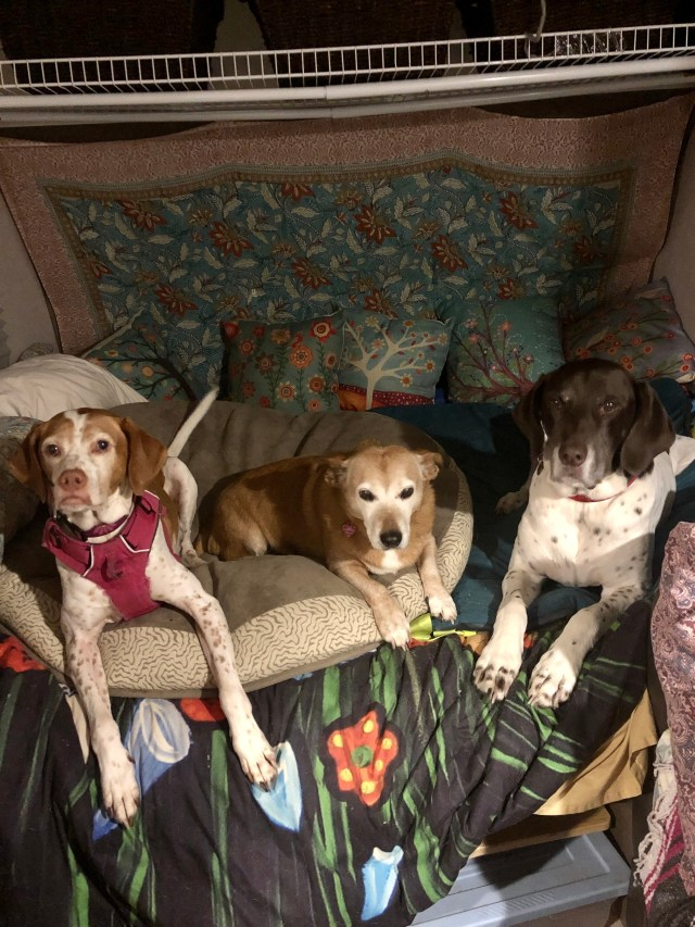 6 Tips for RV Living with Dogs