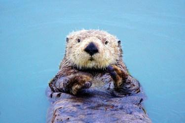 Otter 1 det very best