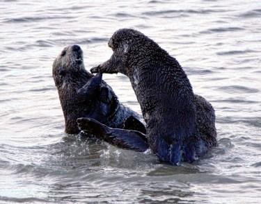 Otter play 1 det best