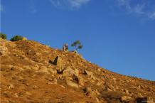 Mt Rubidoux - 11-3-2009 - DSC_2625 WP