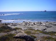 Point Piedras Blancas, California