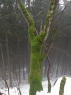 Baum mit Pullover