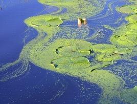 image of algae