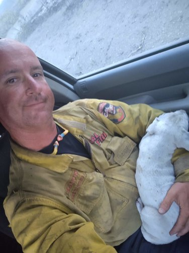 Puppy rescued from Lava Fire