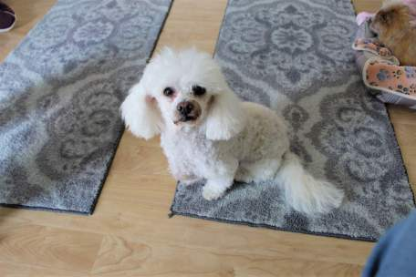 Adopt a senior rescue dogs