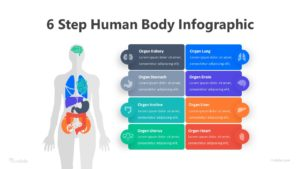 6 Step Human Body Infographic Template