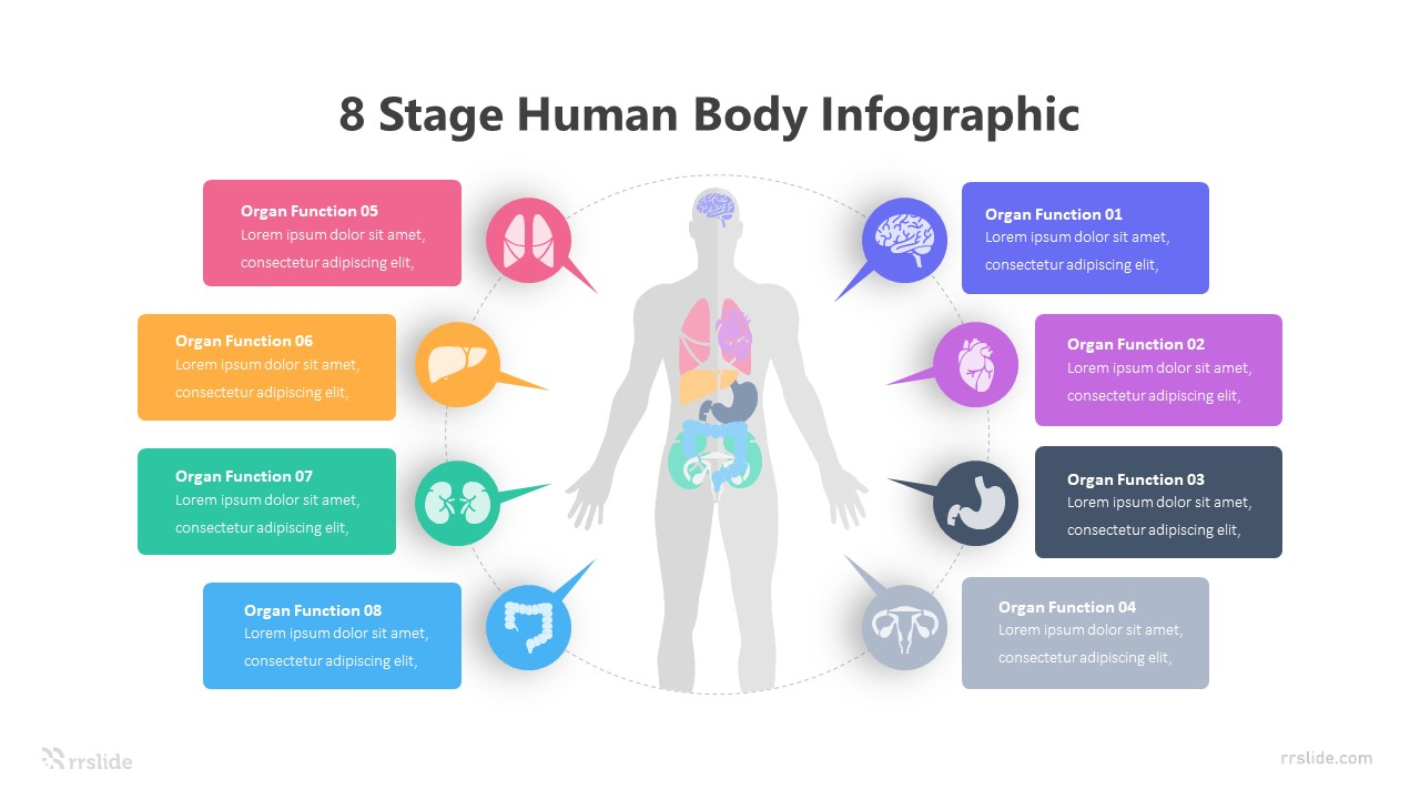 8 Stage Human Body Infographic Template
