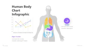 Human Body Chart Infographic Template