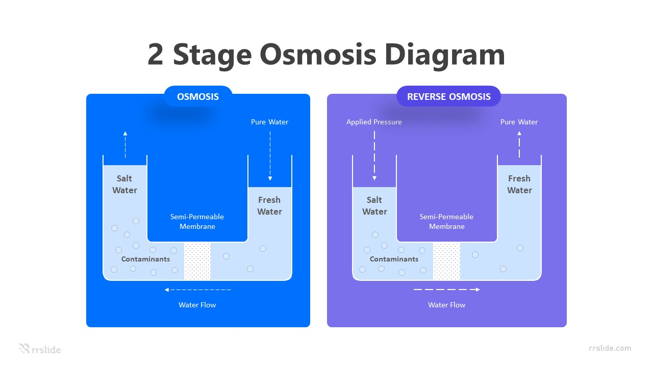 2 Stage Osmosis Diagram Infographic Template
