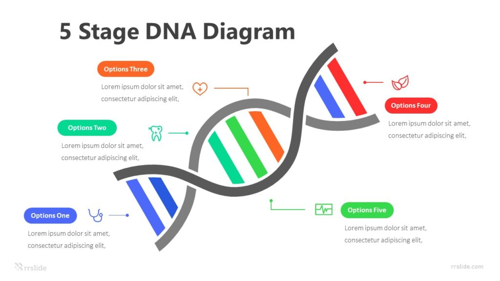 5 Stage DNA Diagram Infographic Template