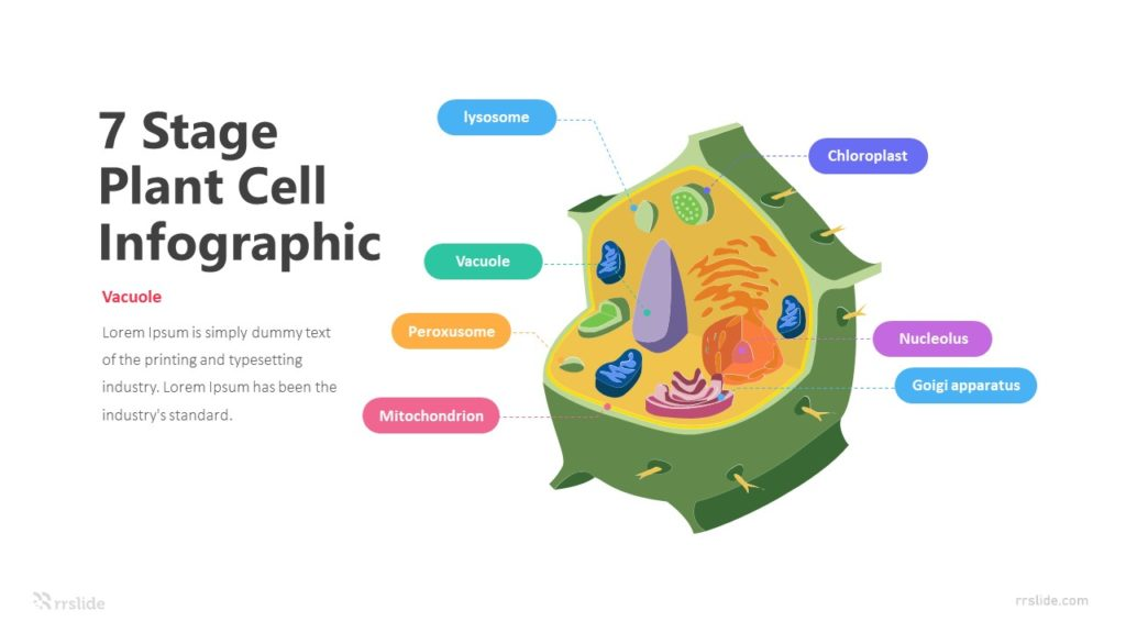 7 Stage Plant Cell Infographic Template
