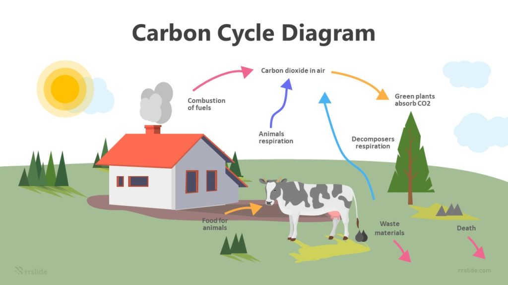 7 Step Carbon Cycle Diagram Infographic Template