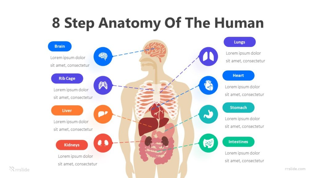 8 Step Anatomy Of The Human Infographic Template