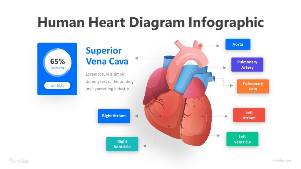 7 Human Heart Diagram Infographic Template