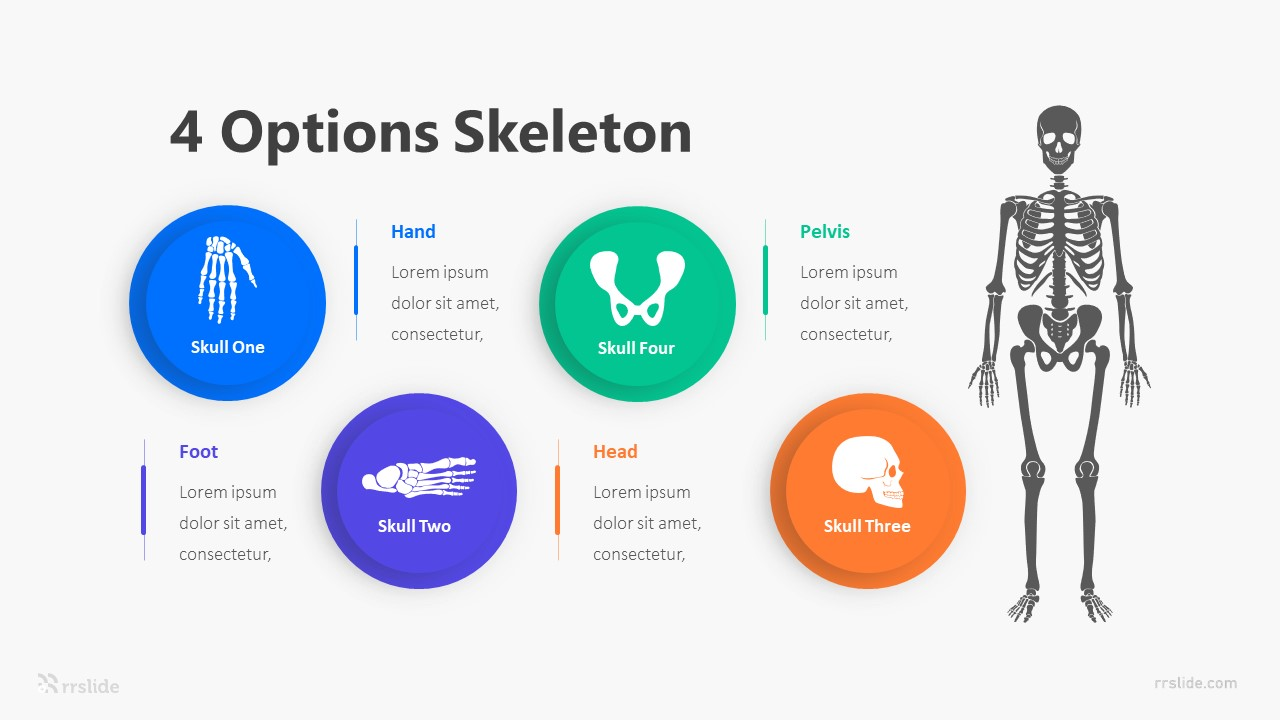 4 Options Skeleton Infographic Template