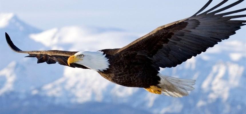 """Image result for eagle soaring"""""""