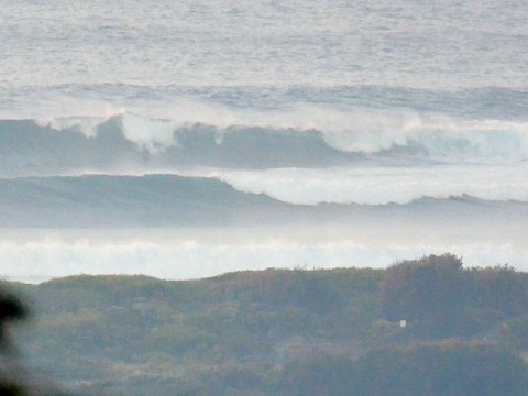 dee why point wave
