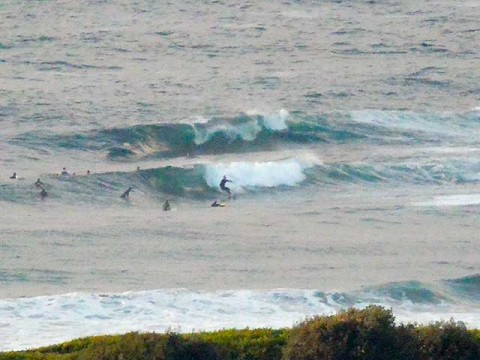 surfing dee why point