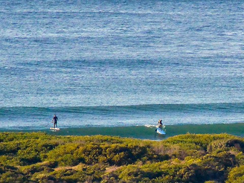 Stand-up surfer at Dee Why