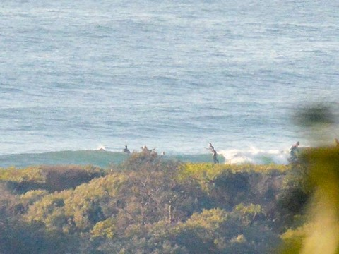 dee why beach surfing