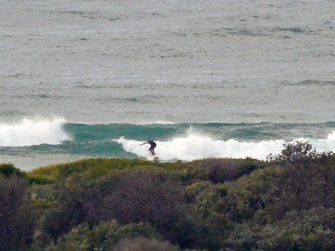 surf at dee why