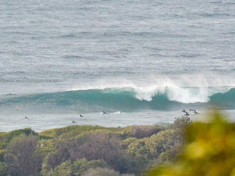 surfing wave at dee why