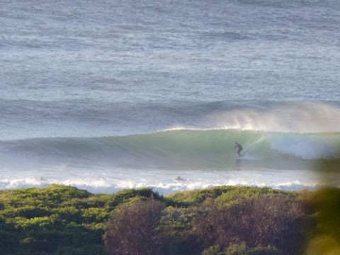 surfing at dee why beach
