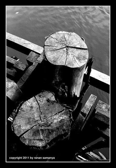 mangrovejetty08