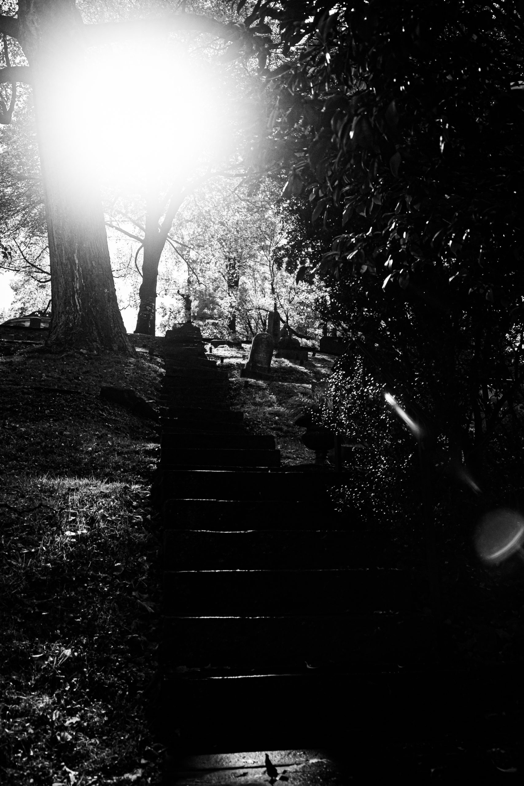 A stone staircase leading from the ground towrads the top of a hill, with headstones visible on the right side of the photo along with shrubs, the sun in the upper mid to left side, and a tree to the left, about halfway up. With many other trees in the background.