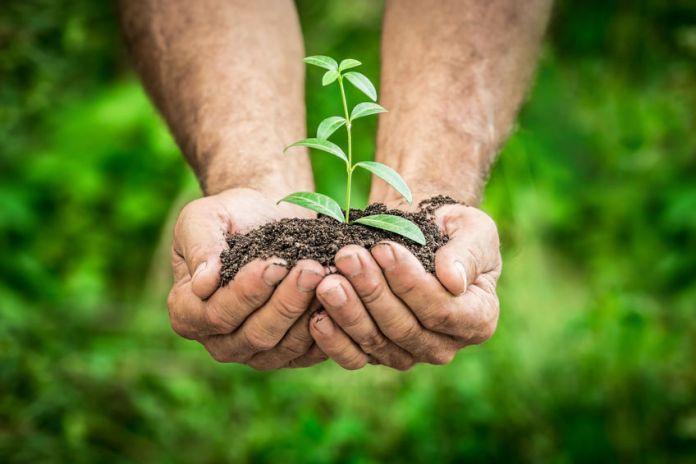 Le mani raccolgono la terra con un germoglio - raccolta differenziata e riciclo in CGN