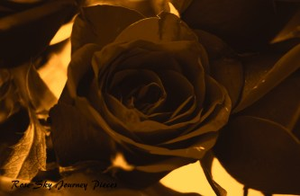 'New bloom' Photography and edit by Rose-Sky Journey Pieces. Copyright 2016.