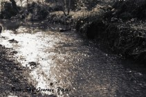 'Shining rivers' Photography and edit by Rose-Sky Journey Pieces. Copyright 2016.