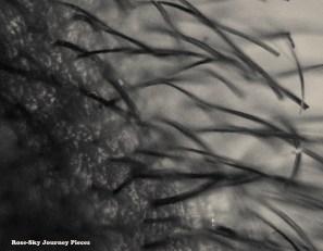 'Hair garden' Close-up photography of facial beard hair. Photography by Rose-Sky Journey Pieces. 2017.
