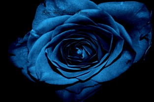 'Rose blues.' Photography by Rose-Sky Journey Pieces. 2017.