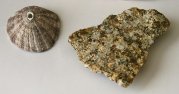 shell and granite