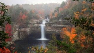 Grants support habitat restoration in Alabama