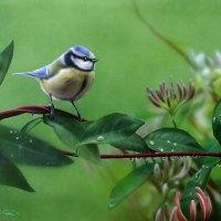 Lukisan-lukisan burung karya Carl Thompson