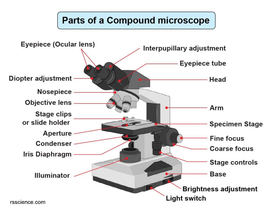 Compound Microscope Parts Labeled Diagram And Their