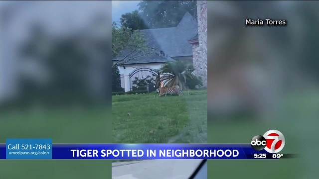 Houston police think a missing Bengal tiger is still in the city — but they don't know where