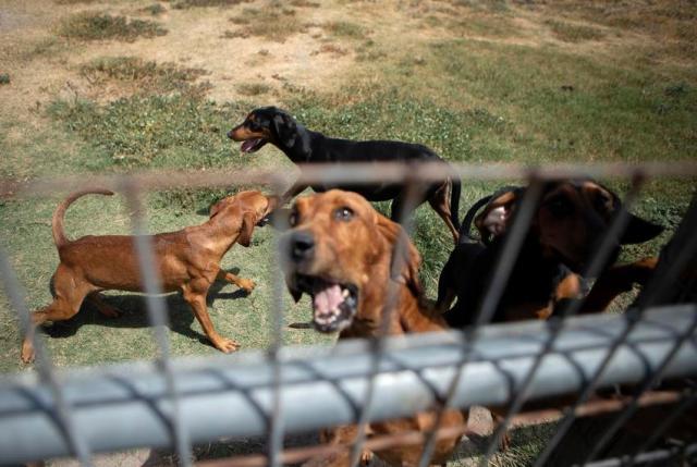 Refugio Bloodhounds MG TT 05