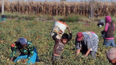 Photo of En México, más de dos millones de menores de edad sufren de explotación infantil