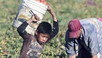 Photo of México no alcanzará la meta de erradicar el trabajo infantil