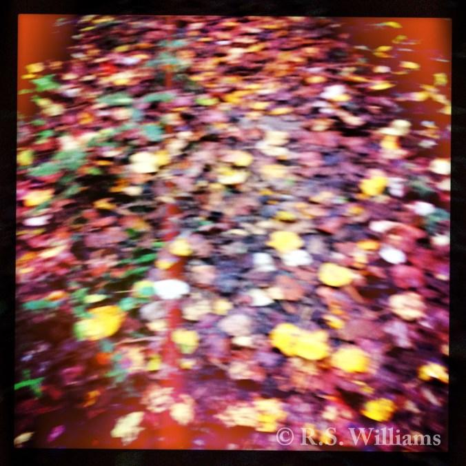 autumnleavesno1_copy_2015-10-10