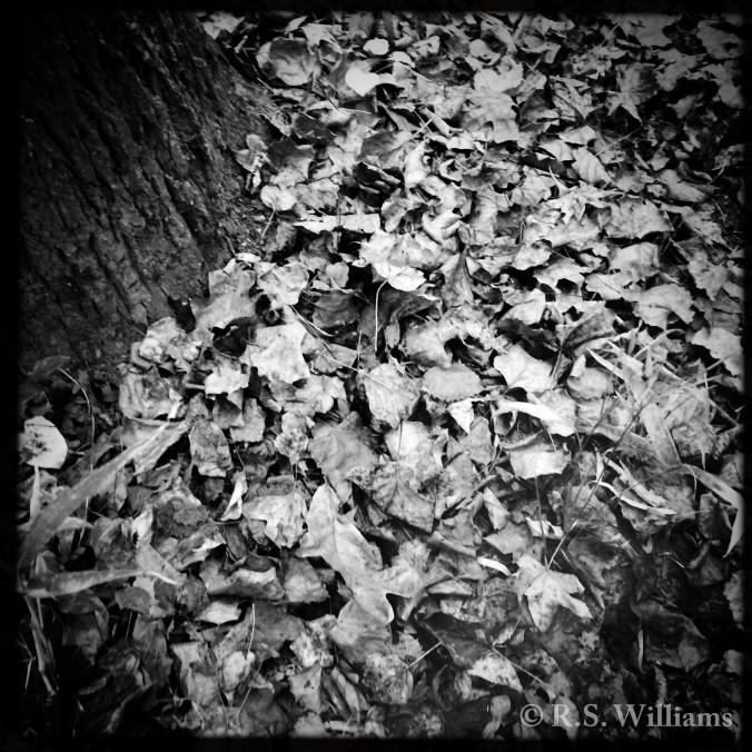 forestfloorautumndrought_copy
