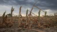 US #Ethanol Revolution Causes 'Ecological Disaster'