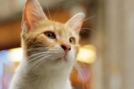 トルコの人は猫が好き