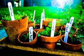 herbs edited