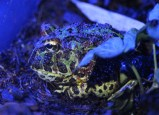 Best beast, however, was the horned frog.