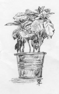 coffeeplant